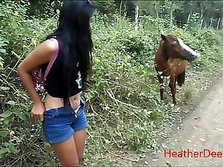 peeing hunt down here horse in grid-work